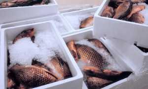 Срок годности замороженной рыбы: сколько можно хранить ее в морозилке