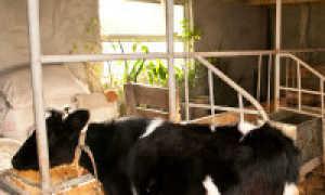 Сарай для скота своими руками