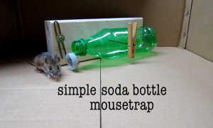 Как сделать мышеловку из пластиковой бутылки + видео
