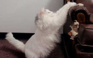 Как отучить кошку драть обои и мебель