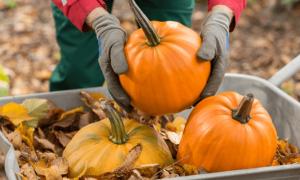 Как хранить тыкву в домашних условиях в квартире: как сохранить овощ на зиму