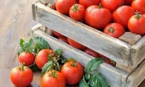 Как хранить помидоры: можно ли хранить в холодильнике в домашних условиях