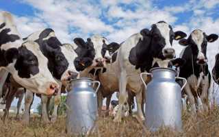 Сколько хранится молоко пастеризованное: какие условия и при какой температуре