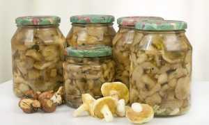 Сколько хранятся маринованные грибы в банке в холодильнике: под железной крышкой