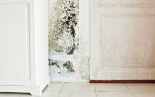 Как убрать плесень в ванной на потолке