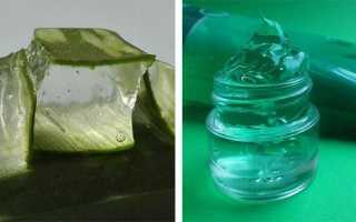 Как хранить сок алоэ: как можно сохранить его в домашних условиях надолго