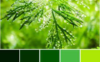 Какие шторы подойдут к зеленым обоям: критерии выбора, варианты сочетания цветов, фото