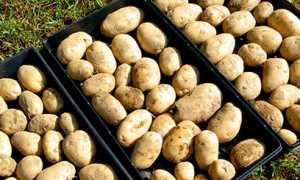 Как хранить картошку в квартире: где лучше хранится овощ в домашних условиях