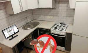 Как избавиться от муравьев на кухне в домашних условиях разными методами