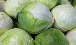 Как хранить капусту: можно ли сохранить ее на зиму в домашних условиях в свежем виде